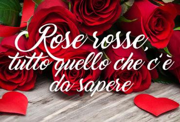 Rose rosse, tutto quello che c'è da sapere