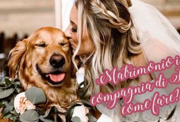 Matrimonio in compagnia di Fido: come fare?